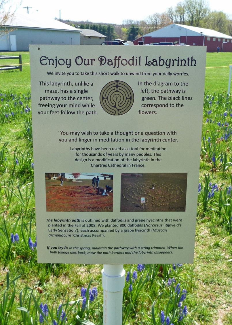 Daffodil Labyrinth
