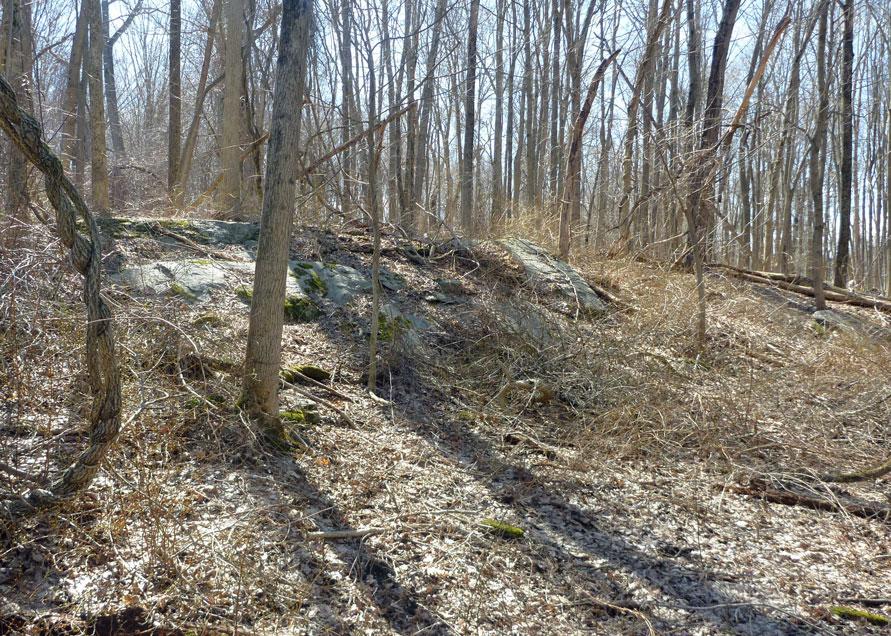 T Ditch landscape