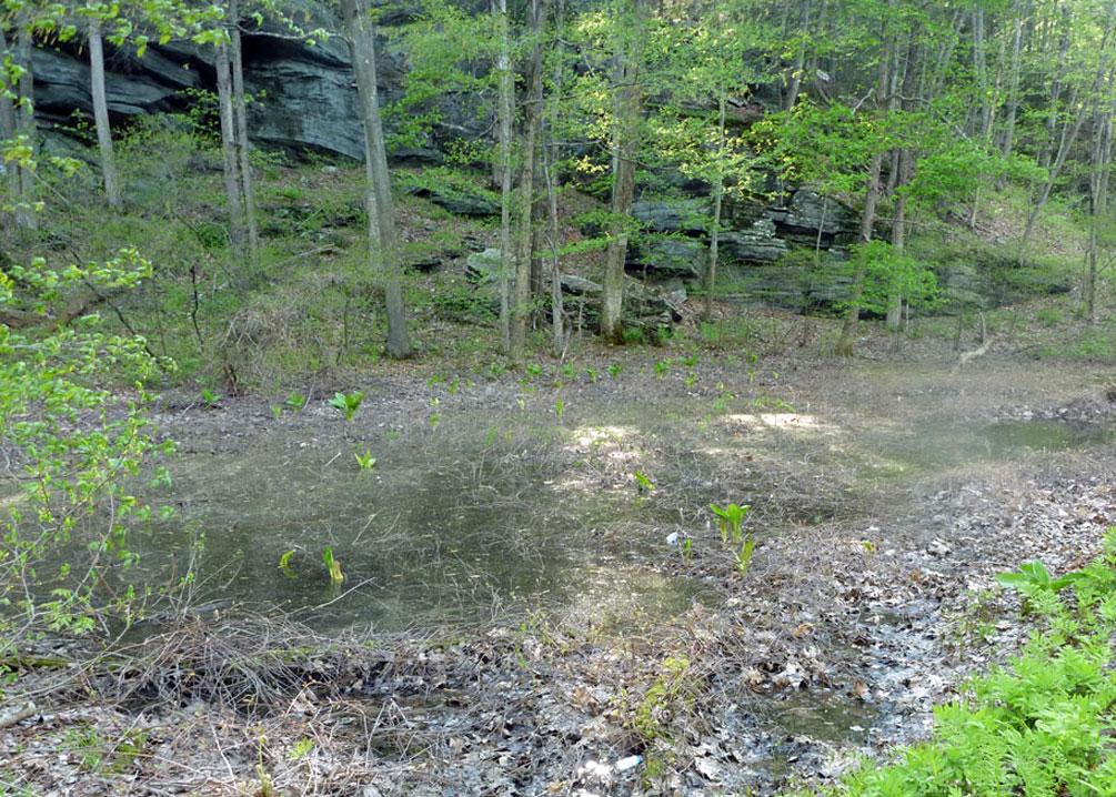 Valley Falls Road Vernal Pool